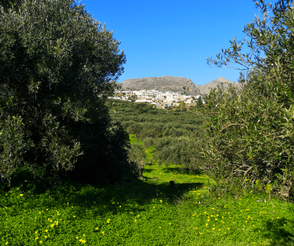 OliveOil from Crete